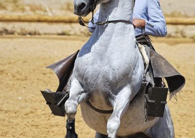 spain-culture-caballo-andaluz