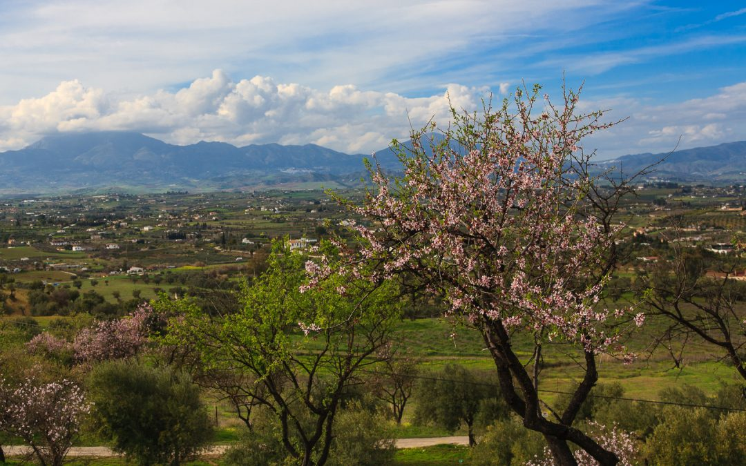Almond blossom in Andalucía